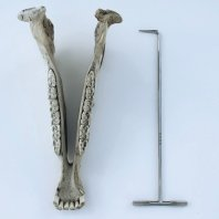 Dental Pick with T piece handle